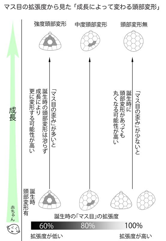 マス目の拡張度の違いと頭部変形